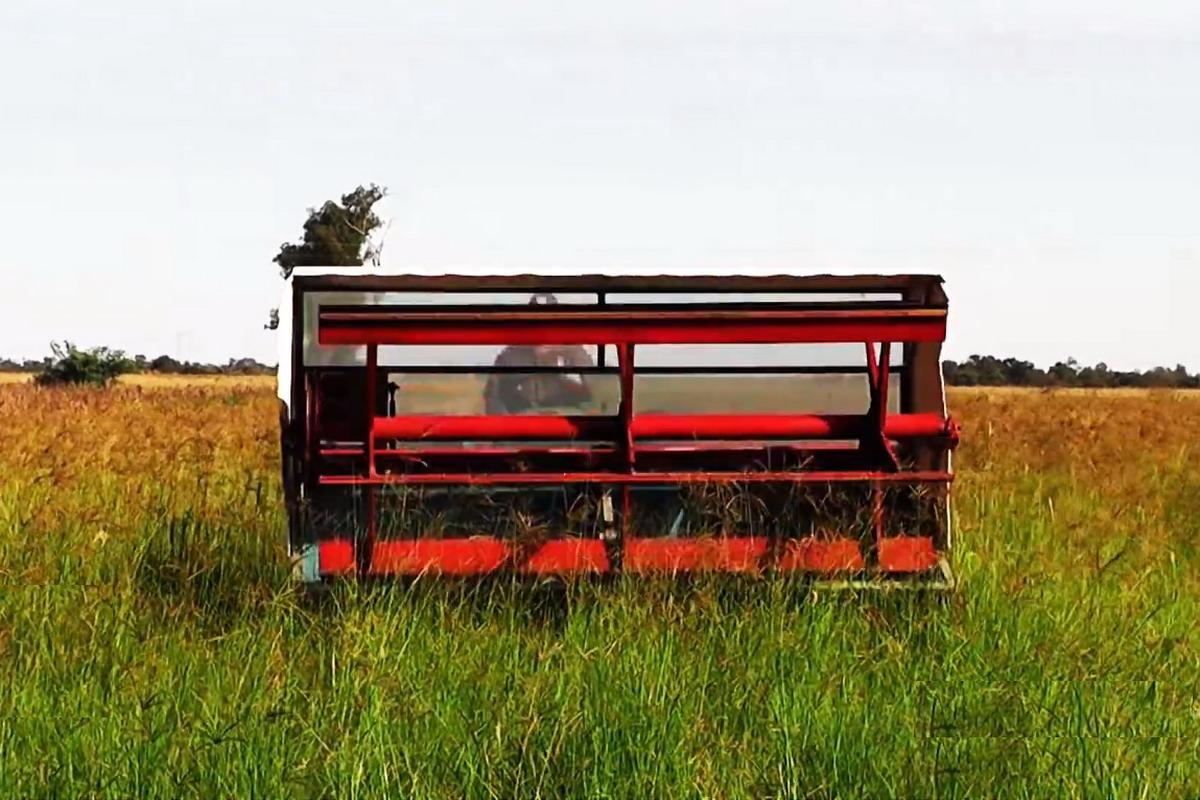 Agro Seri diseñó con el INTA una cosechadora de semillas de ...